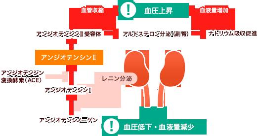 なると 腎臓 が 悪く 心腎連関②〜腎臓が悪くなると心臓が悪くなる?〜