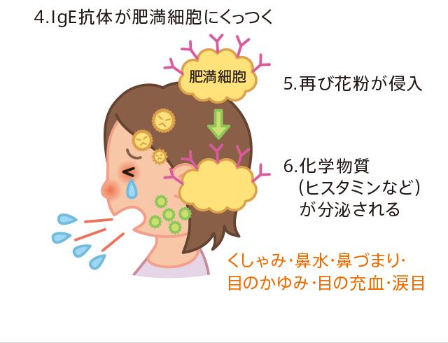 目 かゆい 花粉 が
